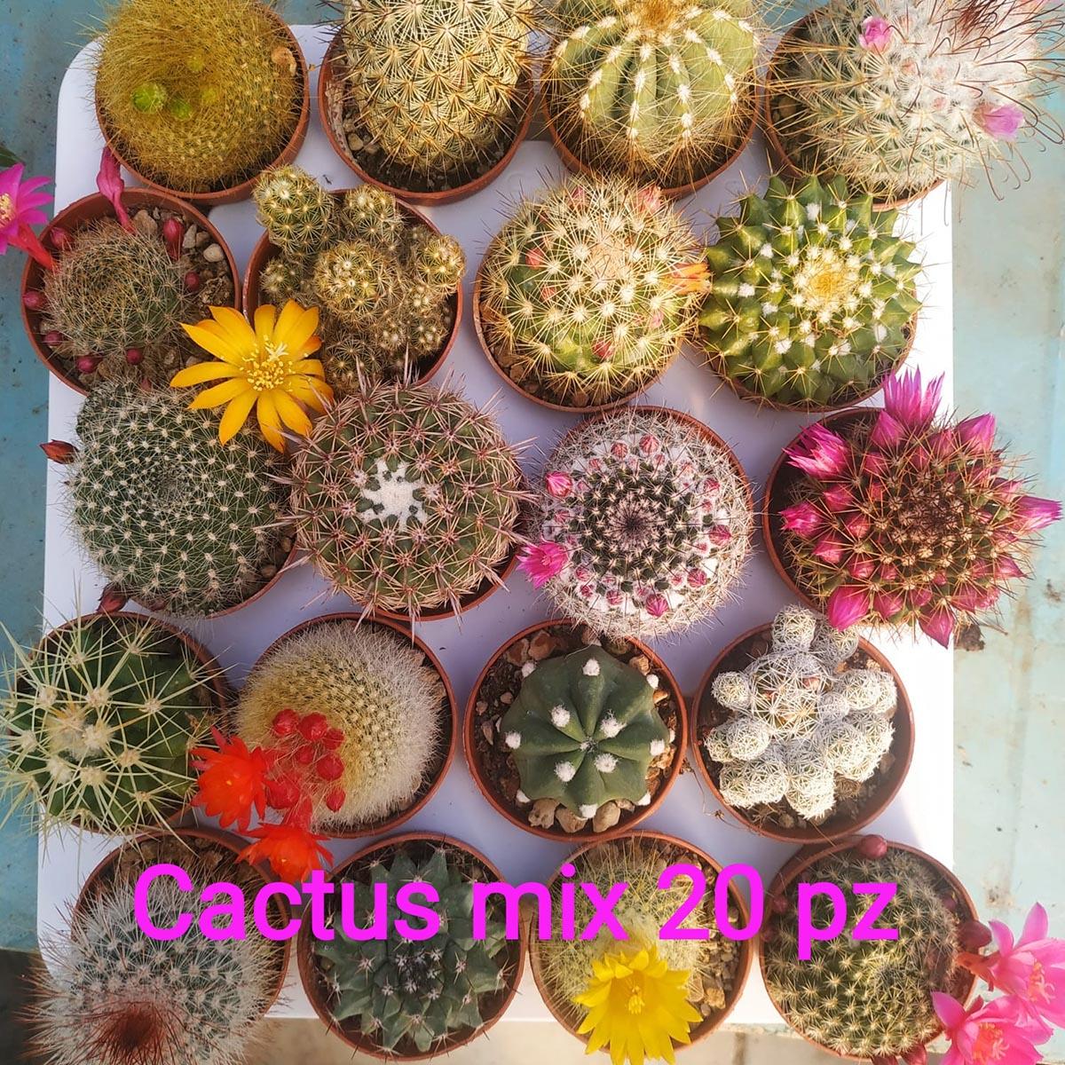 eden plantae cactaceae mix 20