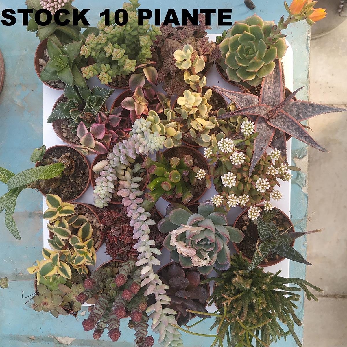 eden plantae succulente mix 10